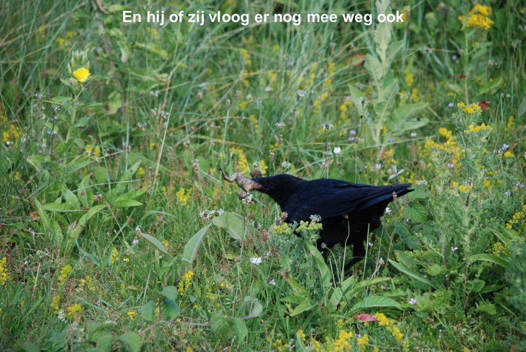 Ook dit is natuur, een vogel met een kikker in zijn bek