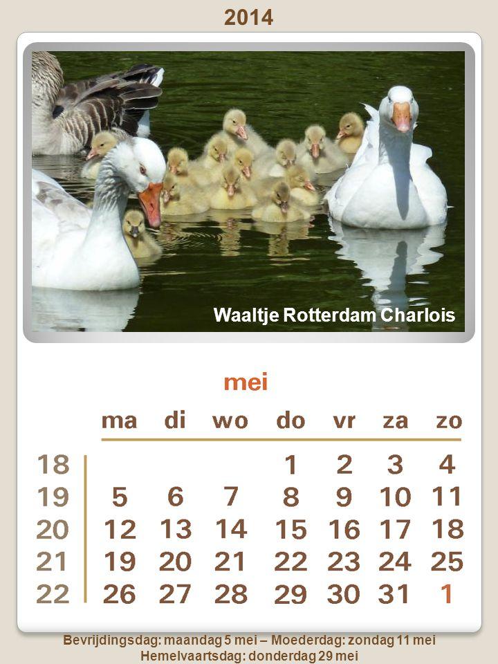 2014 Goede vrijdag: 18 april - Pasen: zondag 20 april en maandag 21 april Koningsdag wordt niet op zondag gehouden dus dit jaar op zaterdag 26 april ss Rotterdam, 3 e Katendrechtse Hoofd