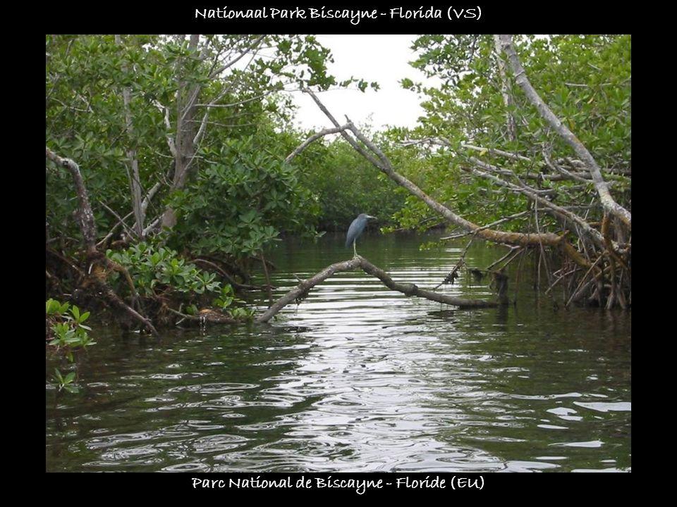 Parc de la rivière bleue - Nouvelle-Calédonie Park van de blauwe rivier - Nieuw-Caledonië