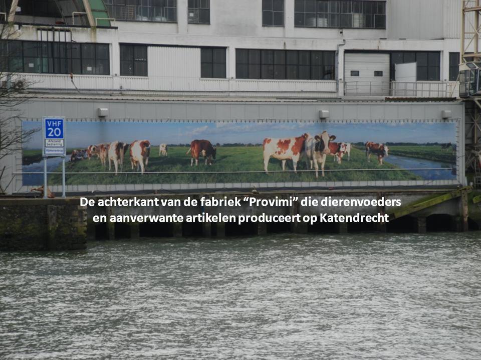 De achterkant van de fabriek Provimi die dierenvoeders en aanverwante artikelen produceert op Katendrecht