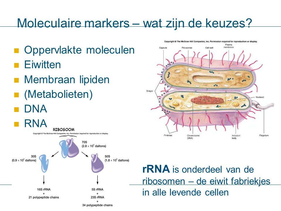 Moleculaire markers – wat zijn de keuzes? Oppervlakte moleculen Eiwitten Membraan lipiden (Metabolieten) DNA RNA rRNA is onderdeel van de ribosomen –