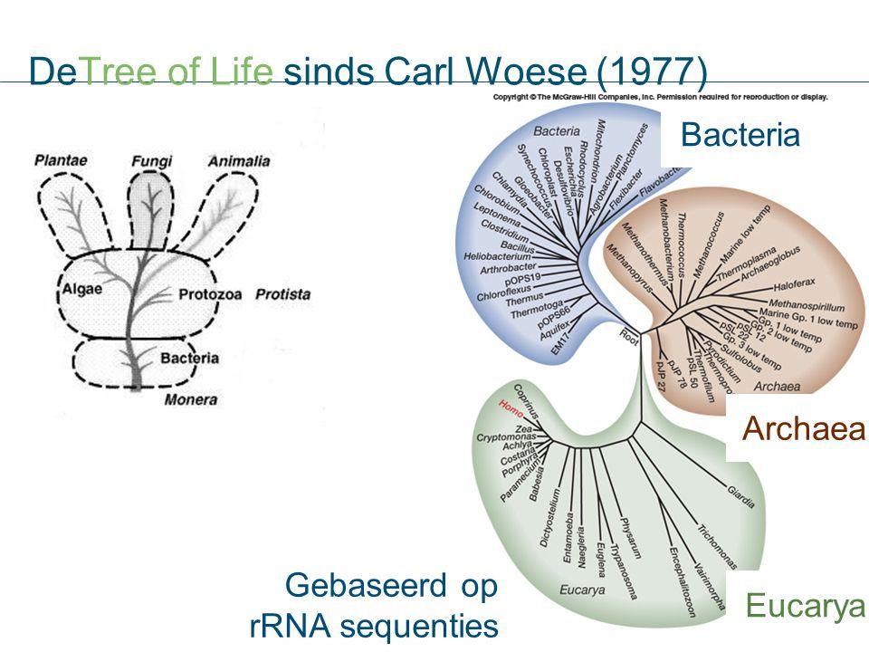 DeTree of Life sinds Carl Woese (1977) Gebaseerd op rRNA sequenties Bacteria Archaea Eucarya