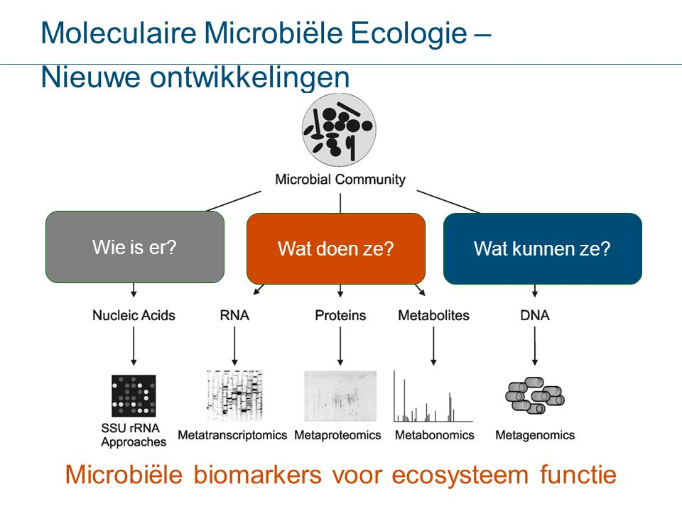 Microbiële biomarkers voor ecosysteem functie Moleculaire Microbiële Ecologie – Nieuwe ontwikkelingen Wie is er? Wat doen ze?Wat kunnen ze?
