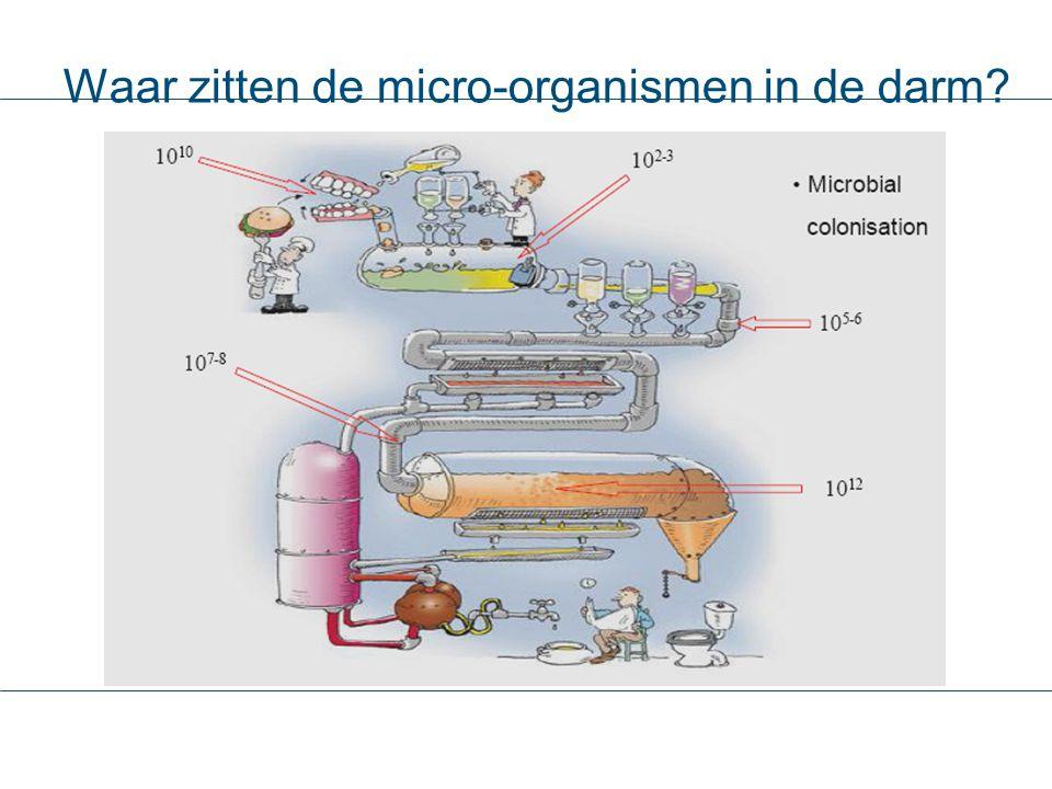 Waar zitten de micro-organismen in de darm?