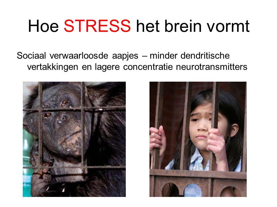 Sociaal verwaarloosde aapjes – minder dendritische vertakkingen en lagere concentratie neurotransmitters Hoe STRESS het brein vormt