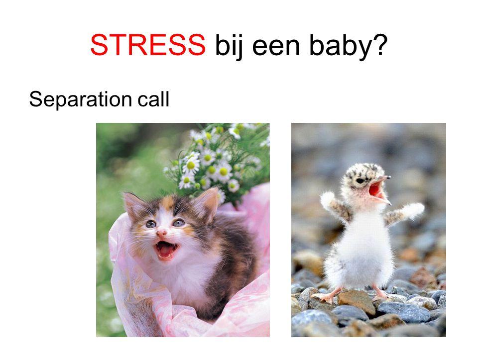 STRESS bij een baby? Separation call