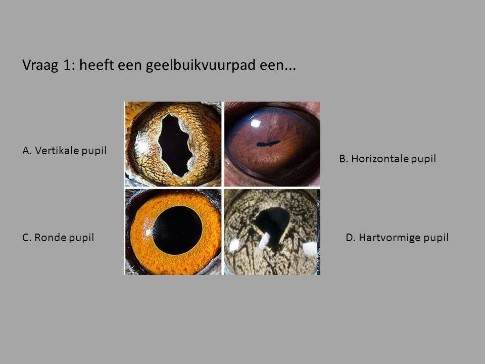 Vraag 1: heeft een geelbuikvuurpad een...A. Vertikale pupil D.