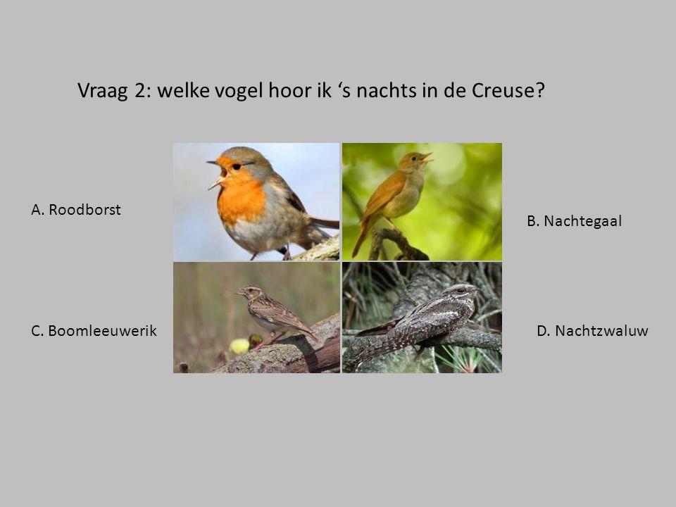 Vraag 2: welke vogel hoor ik 's nachts in de Creuse.