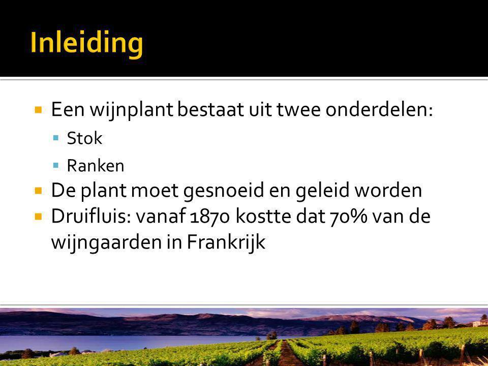  Een wijnplant bestaat uit twee onderdelen:  Stok  Ranken  De plant moet gesnoeid en geleid worden  Druifluis: vanaf 1870 kostte dat 70% van de wijngaarden in Frankrijk