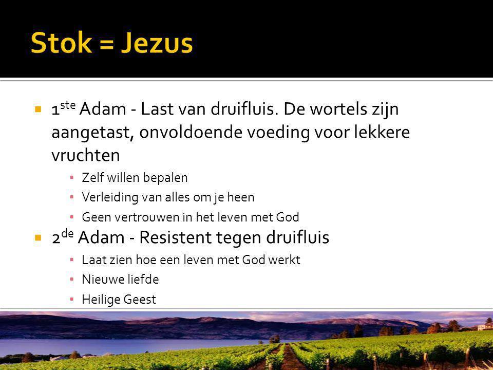  1 ste Adam - Last van druifluis.