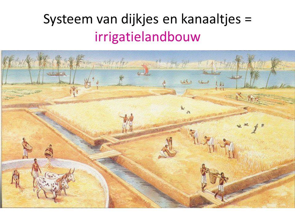 Systeem van dijkjes en kanaaltjes = irrigatielandbouw