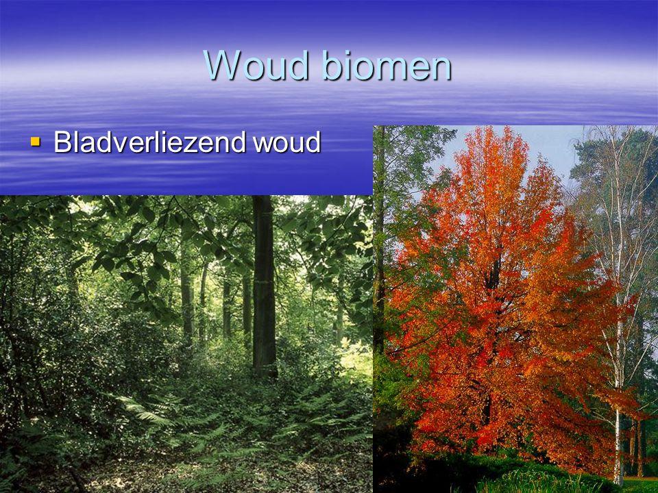 Woud biomen  Bladverliezend woud