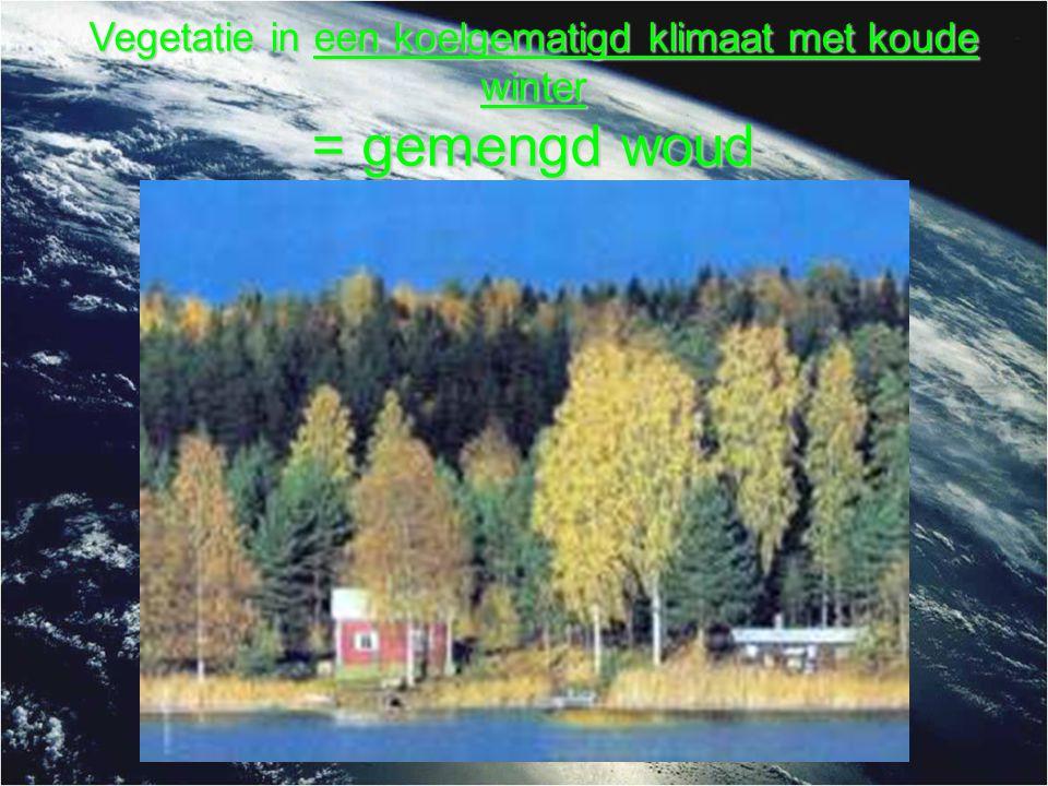 Vegetatie in een koelgematigd klimaat met koude winter = gemengd woud