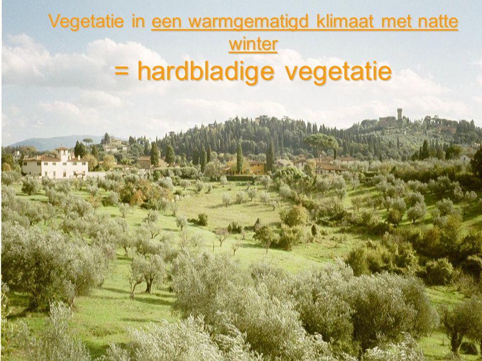 Vegetatie in een warmgematigd klimaat met natte winter = hardbladige vegetatie