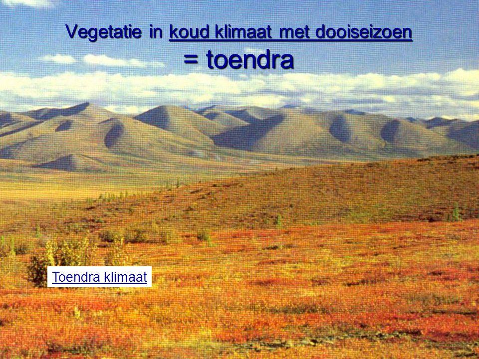 Vegetatie in koud klimaat met dooiseizoen = toendra Toendra klimaat