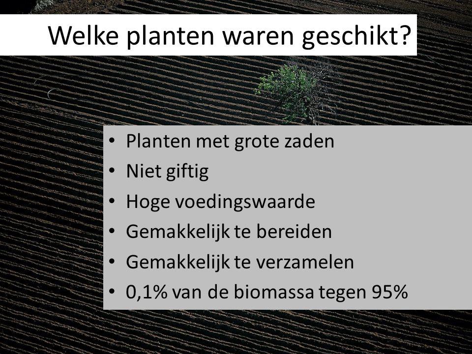 Welke planten waren geschikt? Planten met grote zaden Niet giftig Hoge voedingswaarde Gemakkelijk te bereiden Gemakkelijk te verzamelen 0,1% van de bi