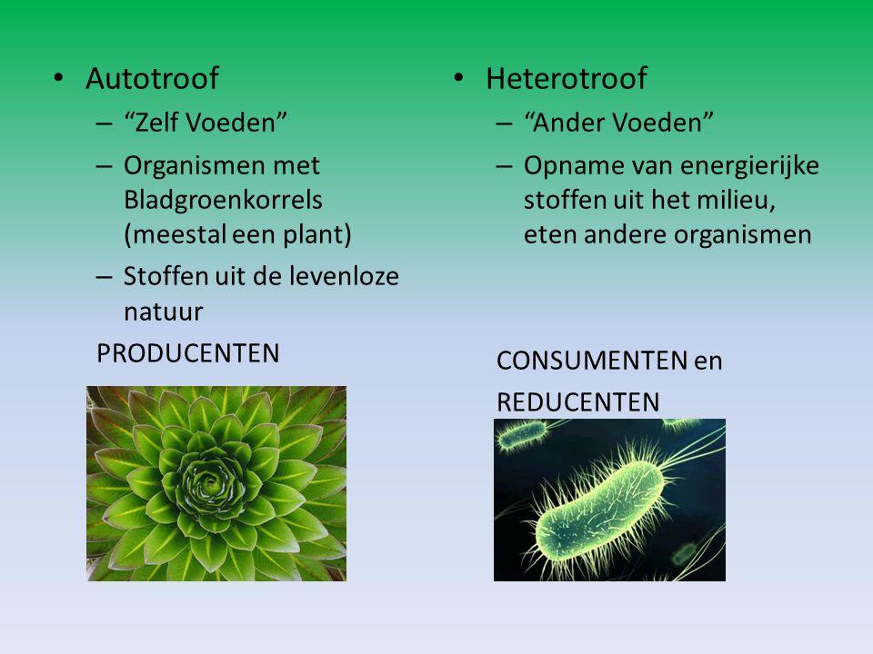 """Autotroof – """"Zelf Voeden"""" – Organismen met Bladgroenkorrels (meestal een plant) – Stoffen uit de levenloze natuur PRODUCENTEN Heterotroof – """"Ander Voe"""