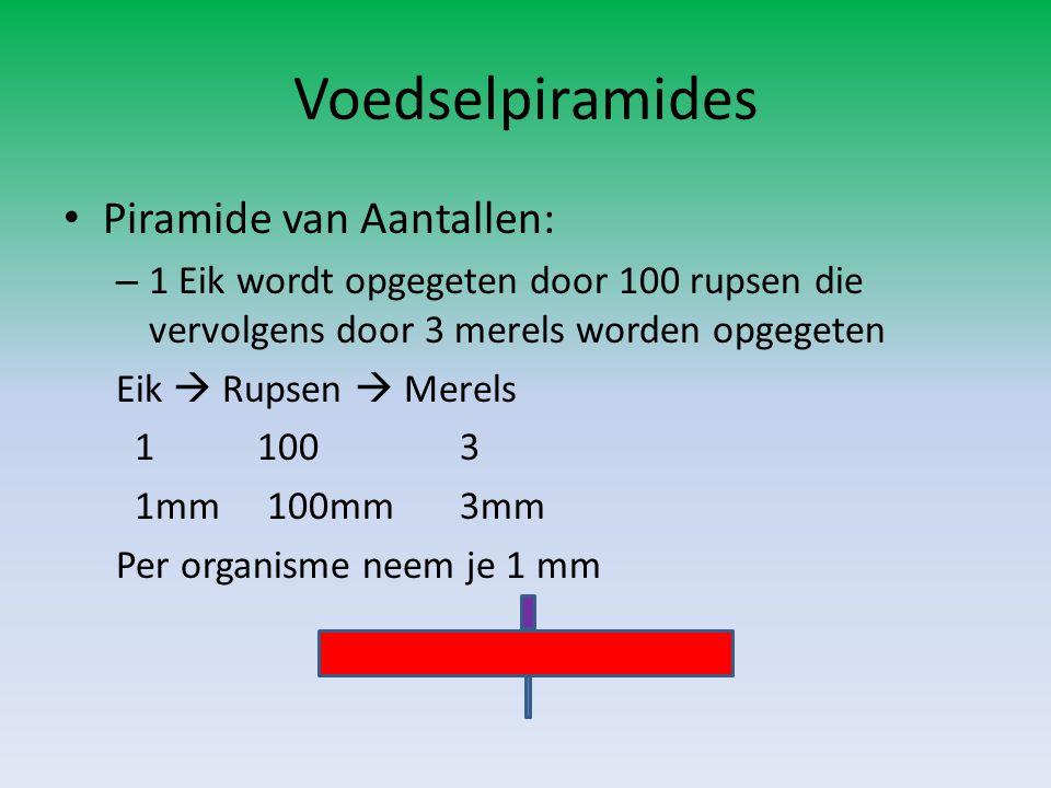 Voedselpiramides Piramide van Aantallen: – 1 Eik wordt opgegeten door 100 rupsen die vervolgens door 3 merels worden opgegeten Eik  Rupsen  Merels 1