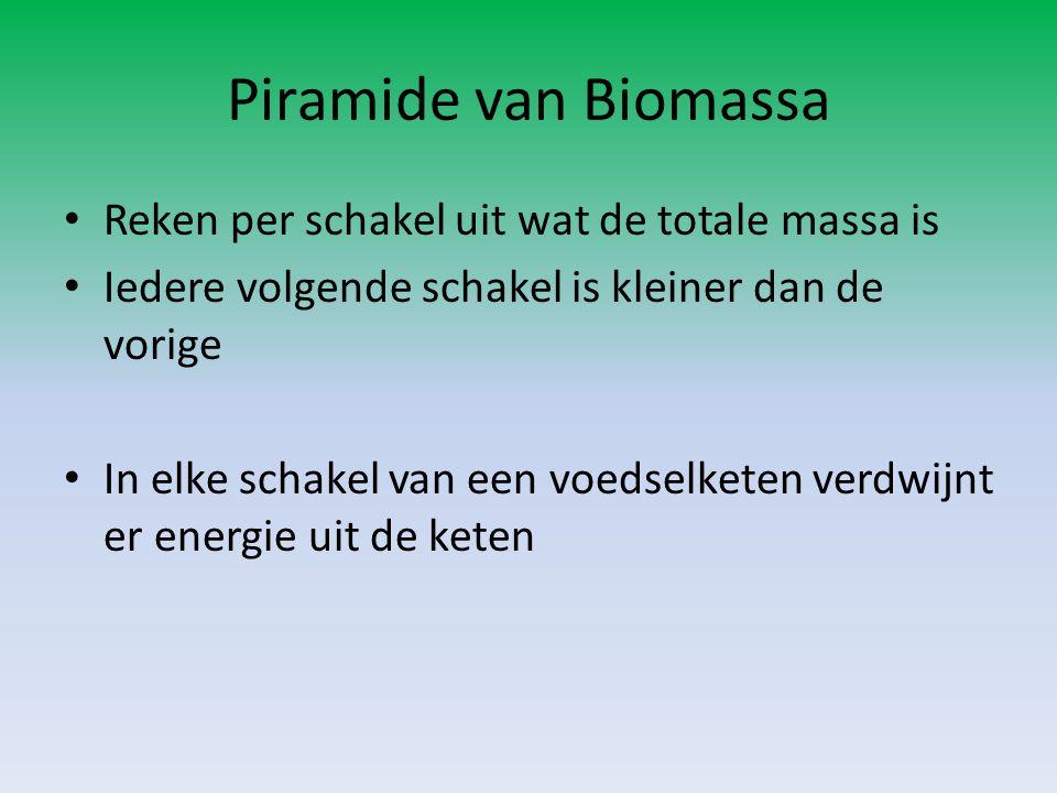 Piramide van Biomassa Reken per schakel uit wat de totale massa is Iedere volgende schakel is kleiner dan de vorige In elke schakel van een voedselket