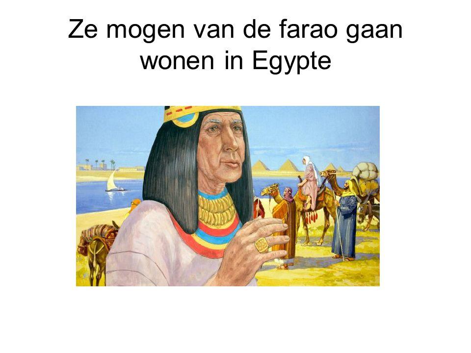 Ze mogen van de farao gaan wonen in Egypte