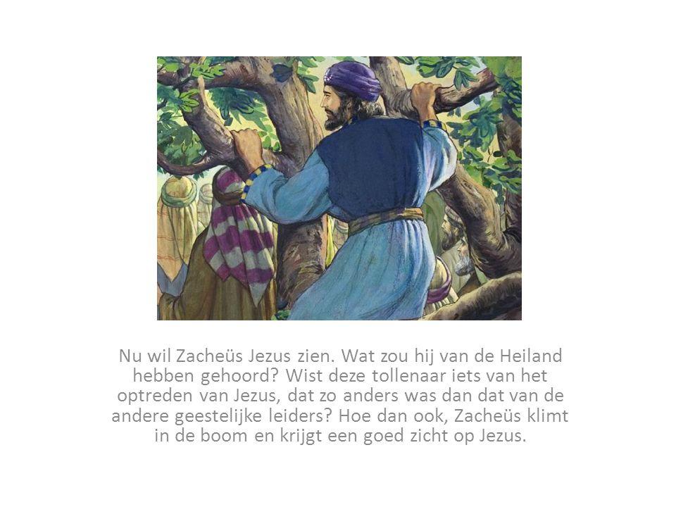 Nu wil Zacheüs Jezus zien.Wat zou hij van de Heiland hebben gehoord.