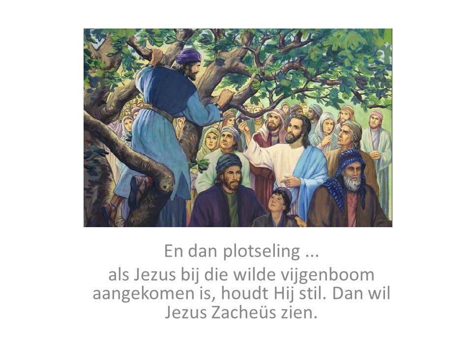 En dan plotseling...als Jezus bij die wilde vijgenboom aangekomen is, houdt Hij stil.