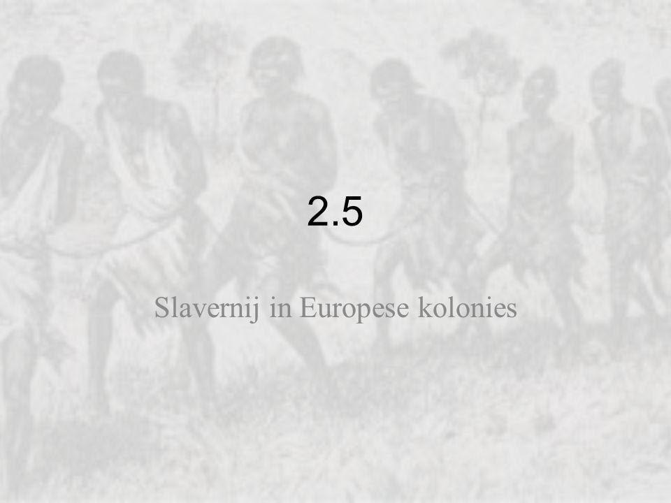 2.5 Slavernij in Europese kolonies