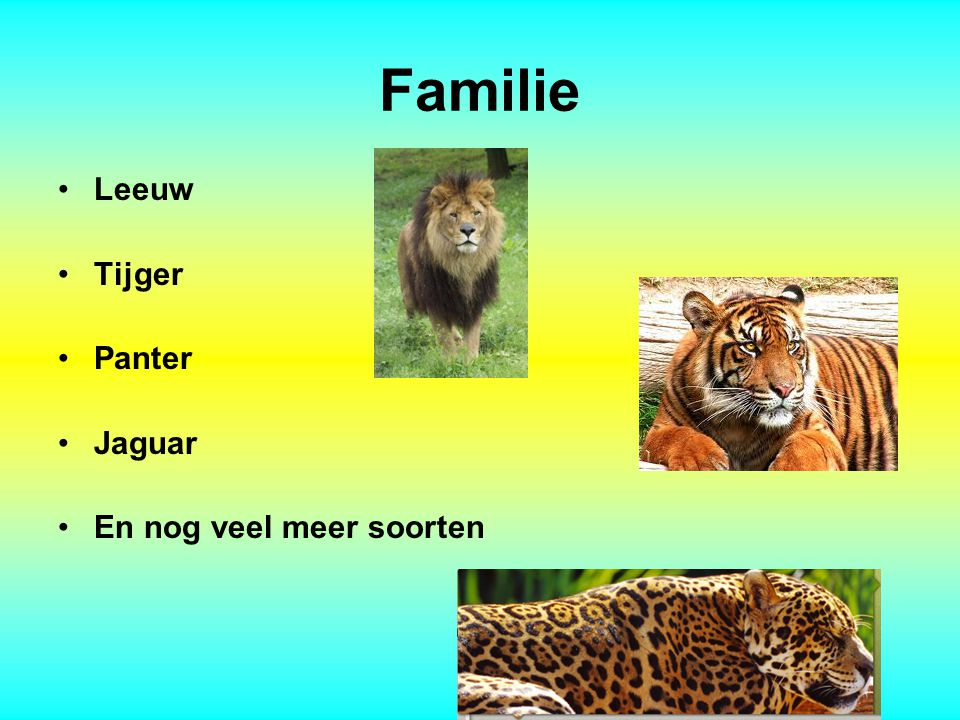 Familie Leeuw Tijger Panter Jaguar En nog veel meer soorten