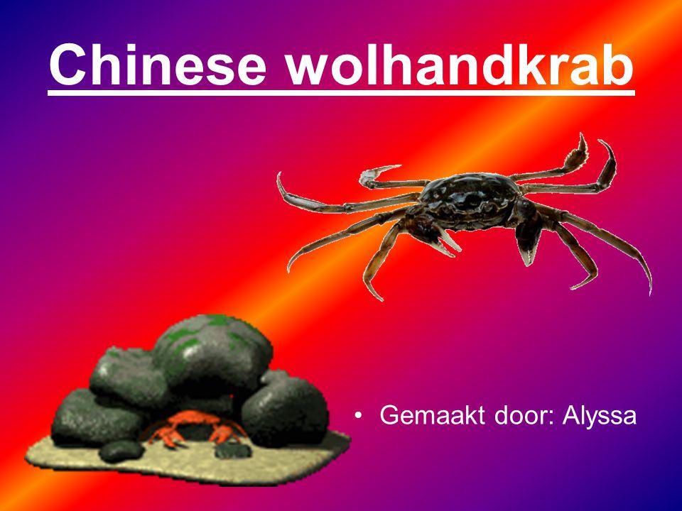 Ik ben eng haha. oh en ik ben de Chinese wolhandkrab