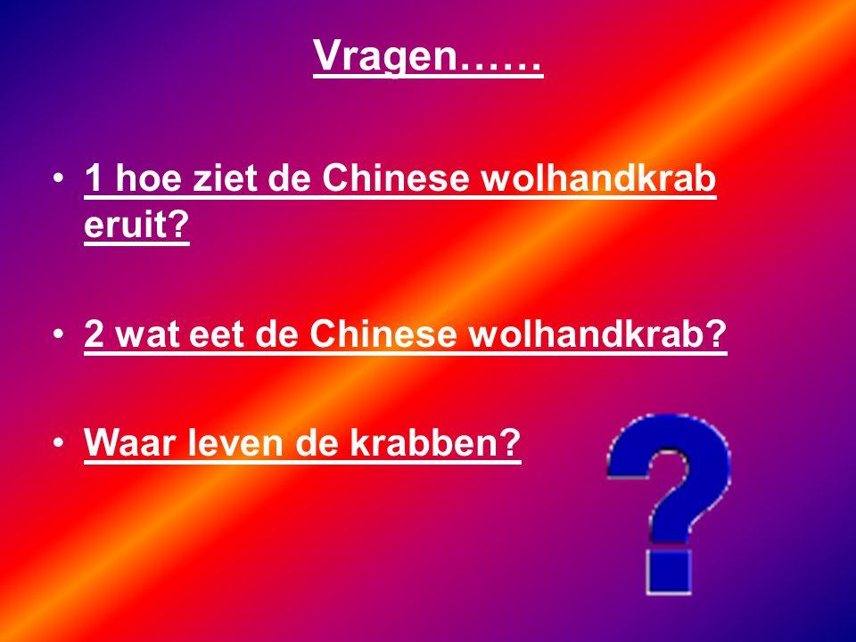 Vragen…… 1 hoe ziet de Chinese wolhandkrab eruit? 2 wat eet de Chinese wolhandkrab? Waar leven de krabben?