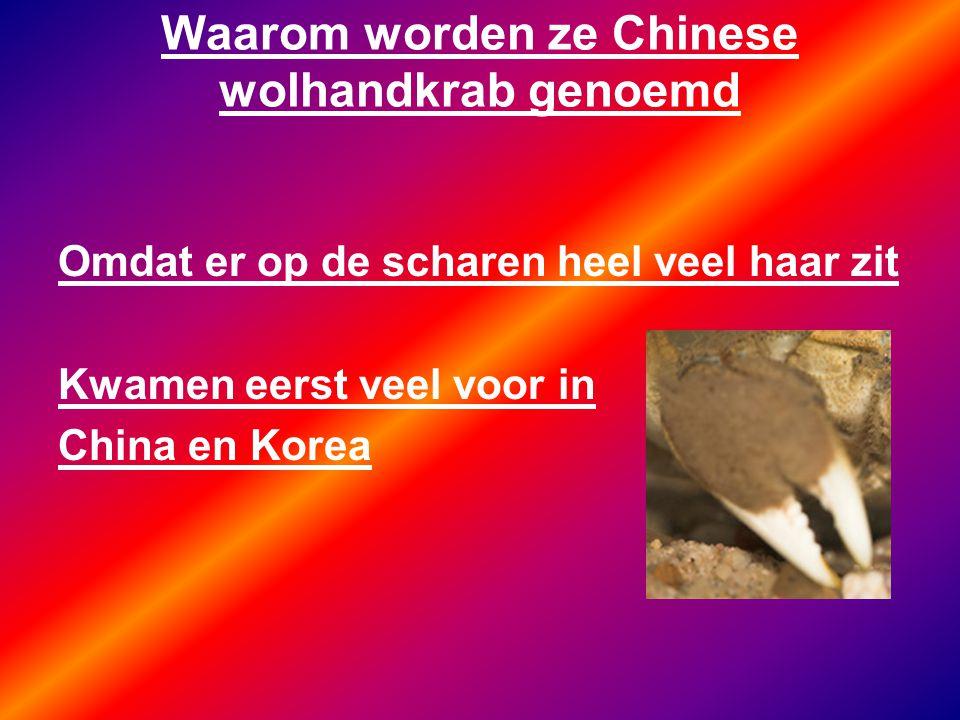 Waarom worden ze Chinese wolhandkrab genoemd Omdat er op de scharen heel veel haar zit Kwamen eerst veel voor in China en Korea