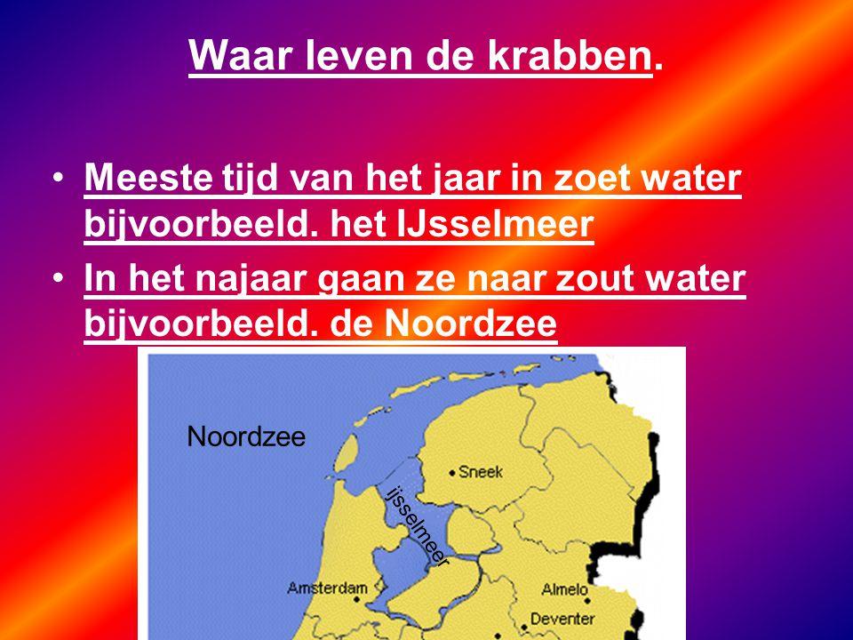 Waar leven de krabben. Meeste tijd van het jaar in zoet water bijvoorbeeld. het IJsselmeer In het najaar gaan ze naar zout water bijvoorbeeld. de Noor