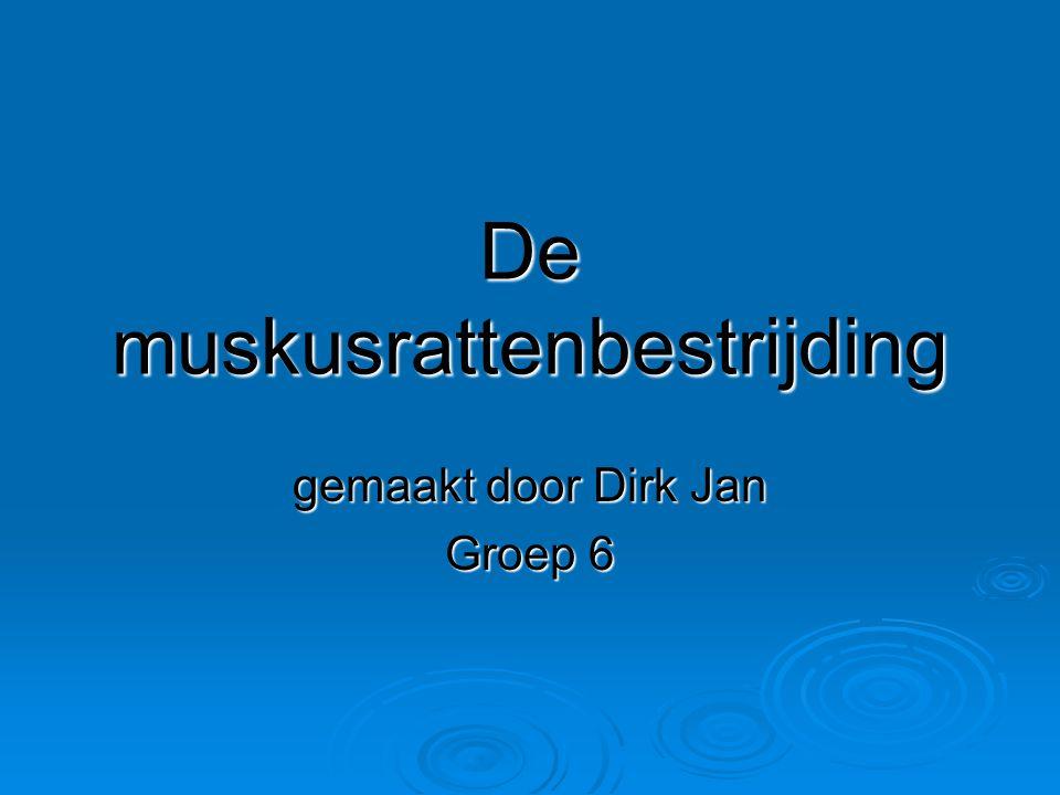 De muskusrattenbestrijding gemaakt door Dirk Jan Groep 6