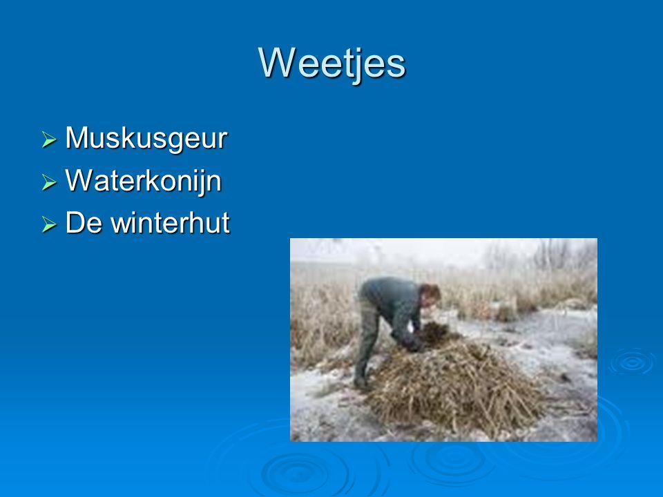 Weetjes  Muskusgeur  Waterkonijn  De winterhut