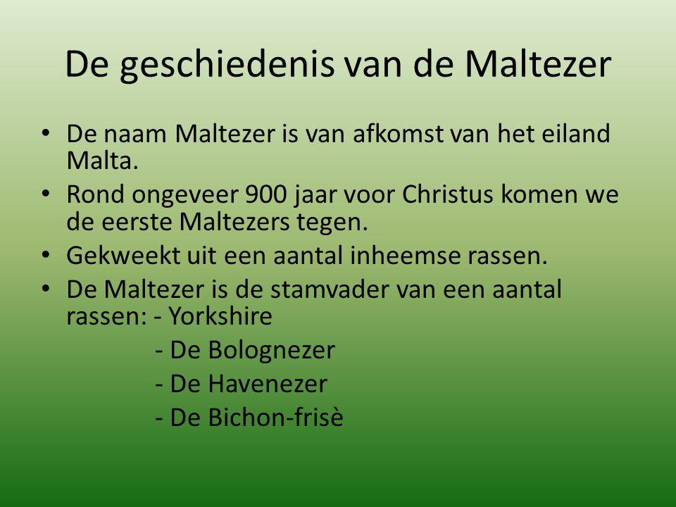 De geschiedenis van de Maltezer De naam Maltezer is van afkomst van het eiland Malta. Rond ongeveer 900 jaar voor Christus komen we de eerste Maltezer