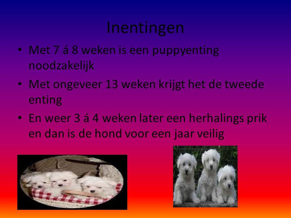 Inentingen Met 7 á 8 weken is een puppyenting noodzakelijk Met ongeveer 13 weken krijgt het de tweede enting En weer 3 á 4 weken later een herhalings