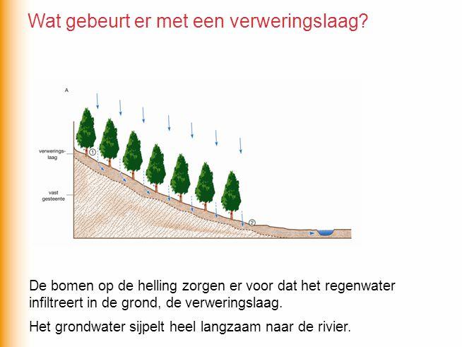 De bomen op de helling zorgen er voor dat het regenwater infiltreert in de grond, de verweringslaag. Het grondwater sijpelt heel langzaam naar de rivi