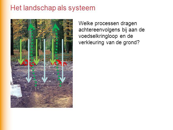 Welke processen dragen achtereenvolgens bij aan de voedselkringloop en de verkleuring van de grond? Het landschap als systeem