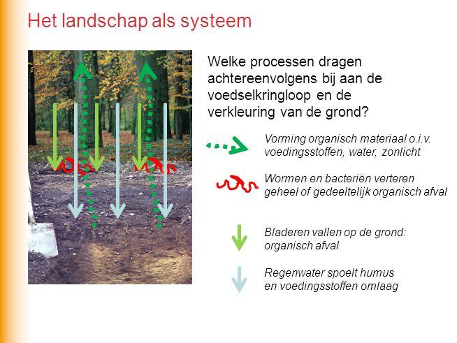 Welke processen dragen achtereenvolgens bij aan de voedselkringloop en de verkleuring van de grond? Vorming organisch materiaal o.i.v. voedingsstoffen