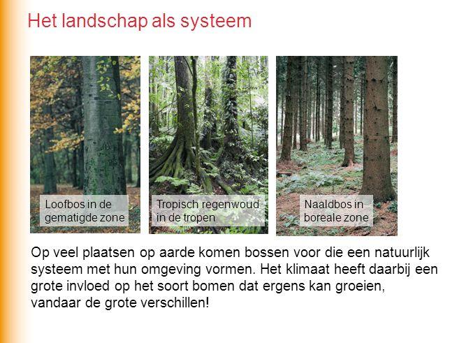 Op veel plaatsen op aarde komen bossen voor die een natuurlijk systeem met hun omgeving vormen. Het klimaat heeft daarbij een grote invloed op het soo