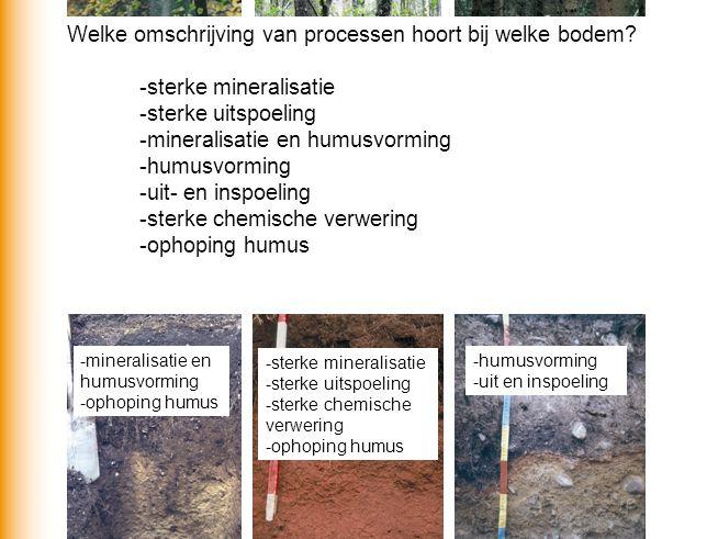 Welke omschrijving van processen hoort bij welke bodem? -sterke mineralisatie -sterke uitspoeling -mineralisatie en humusvorming -humusvorming -uit- e