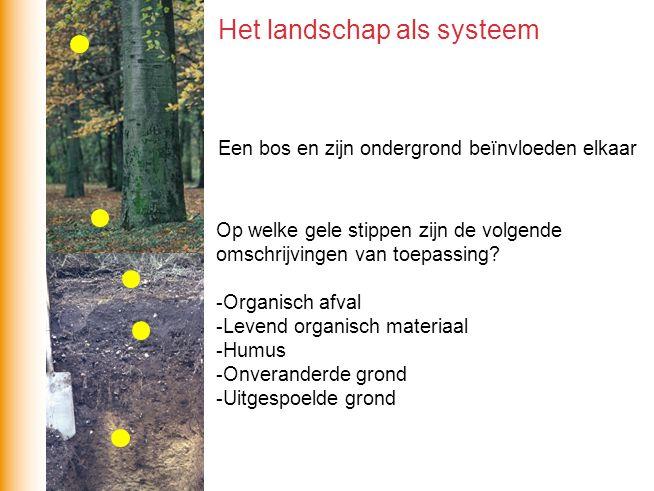 Een bos en zijn ondergrond beïnvloeden elkaar Op welke gele stippen zijn de volgende omschrijvingen van toepassing? -Organisch afval -Levend organisch