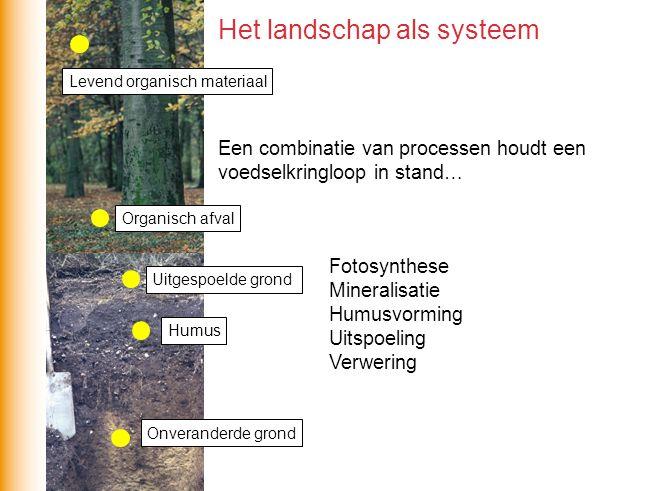 Een combinatie van processen houdt een voedselkringloop in stand… Fotosynthese Mineralisatie Humusvorming Uitspoeling Verwering Het landschap als syst