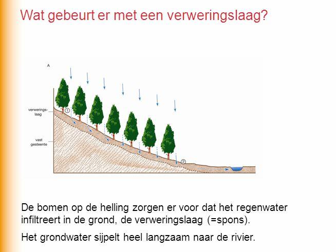 De bomen op de helling zorgen er voor dat het regenwater infiltreert in de grond, de verweringslaag (=spons). Het grondwater sijpelt heel langzaam naa