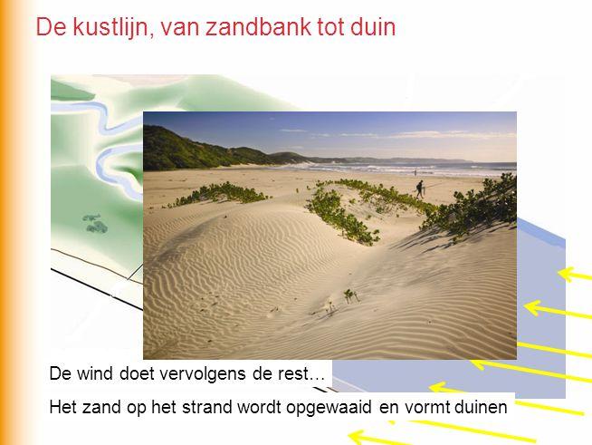 De wind doet vervolgens de rest… Het zand op het strand wordt opgewaaid en vormt duinen De kustlijn, van zandbank tot duin