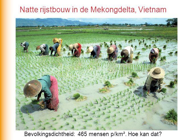 Bevolkingsdichtheid: 465 mensen p/km². Hoe kan dat? Natte rijstbouw in de Mekongdelta, Vietnam