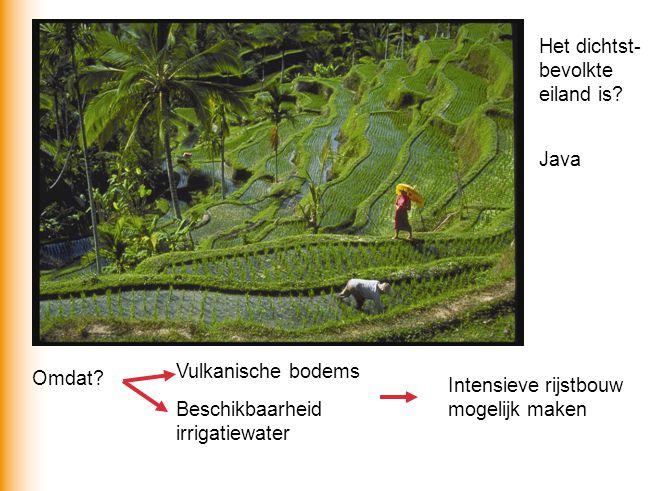 Het dichtst- bevolkte eiland is? Java Omdat? Vulkanische bodems Beschikbaarheid irrigatiewater Intensieve rijstbouw mogelijk maken