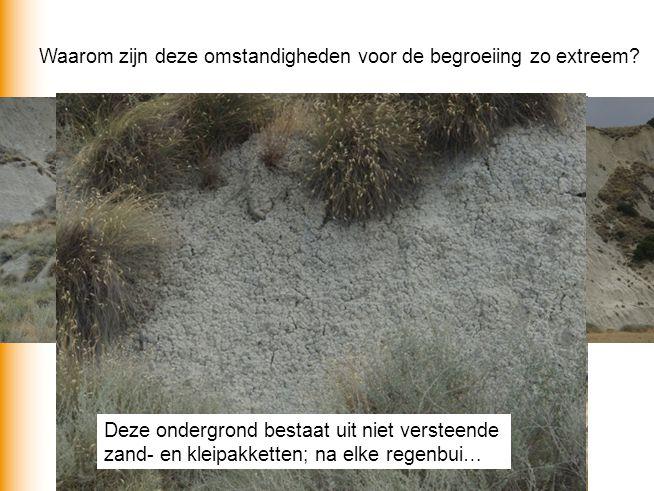 Deze ondergrond bestaat uit niet versteende zand- en kleipakketten; na elke regenbui… Waarom zijn deze omstandigheden voor de begroeiing zo extreem?