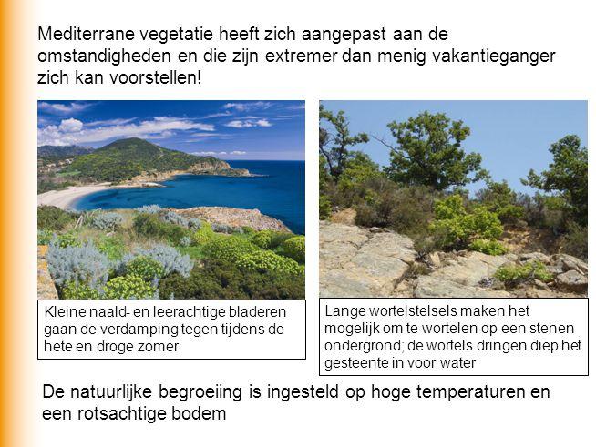 Mediterrane vegetatie heeft zich aangepast aan de omstandigheden en die zijn extremer dan menig vakantieganger zich kan voorstellen! De natuurlijke be