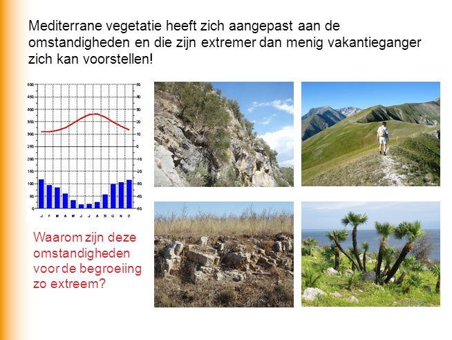 Waarom zijn deze omstandigheden voor de begroeiing zo extreem? Mediterrane vegetatie heeft zich aangepast aan de omstandigheden en die zijn extremer d